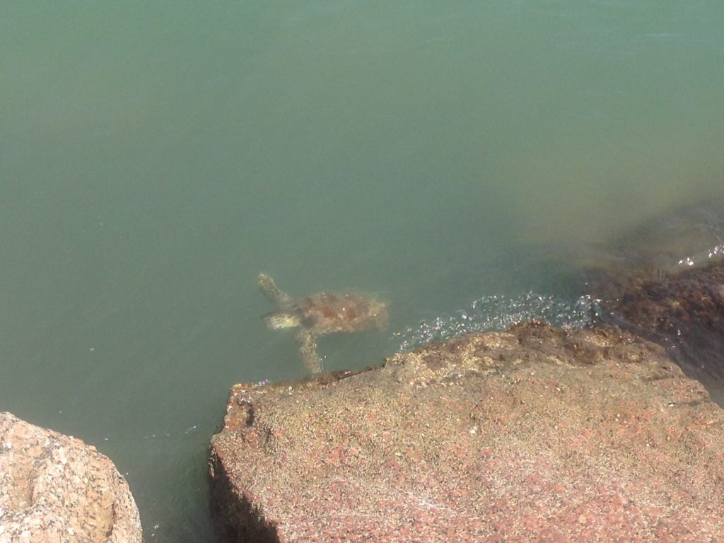 Sea turtle at Roberts Point Park in Port Aransas | www.portaransastex.com