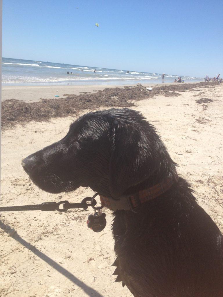 Dogs at beach in Port Aransas | www.portaransastex.com