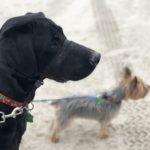Travel with Dogs | www.portaransastex.com
