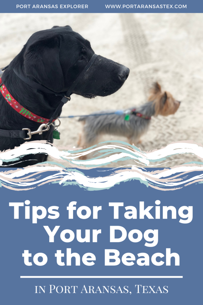Tips for Taking Your Dog to the Beach | www.portaransastex.com