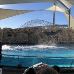 Texas State Aquarium   Day Trips from Port Aransas   www.portaransastex.com