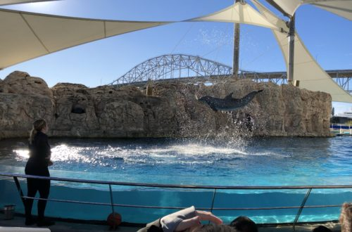 Texas State Aquarium | Day Trips from Port Aransas | www.portaransastex.com