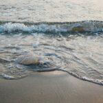 How to treat a jellyfish sting at the beach | Port Aransas Explorer