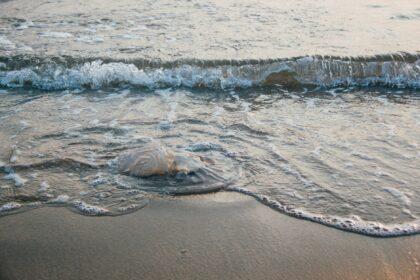 How to treat a jellyfish sting at the beach   Port Aransas Explorer